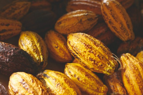 Cacao Guadeloupe