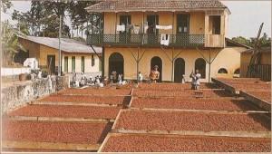 Histoire du chocolat, sechage